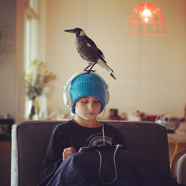 penguin-magpie-rescue-friendship-bloom-family-australia-20