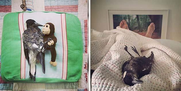 Спит в обнимку с любимой игрушкой