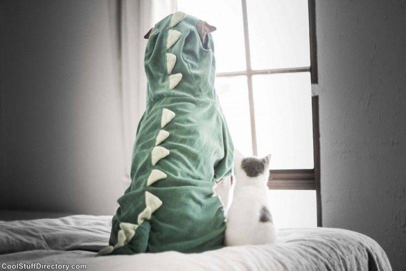 New Instagram Star Shar Pei Dog Paddington (14)