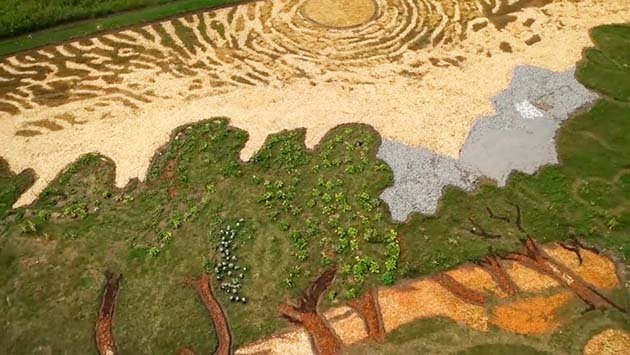 eathworks-seed-art-van-gogh-olive-trees-field-stan-herd-minneapolis-29