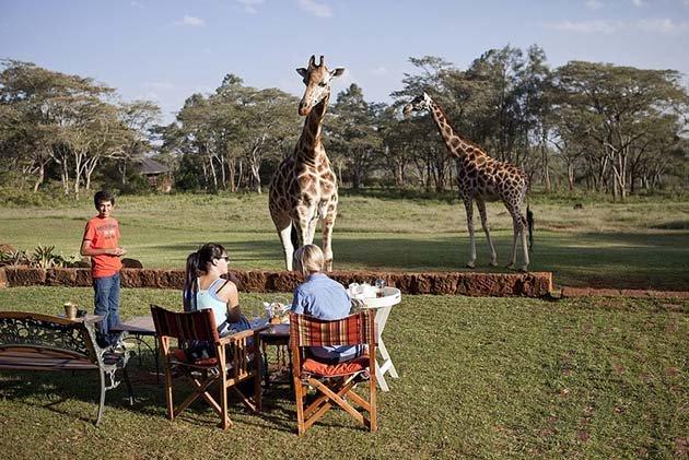 giraffe-manor-hotel-nairobi-kenya-africa-safari-11