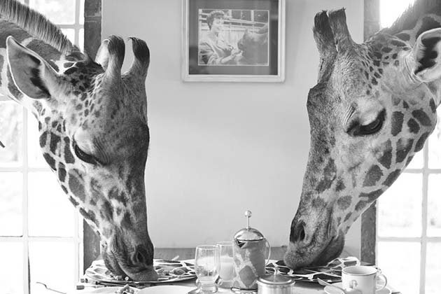 giraffe-manor-hotel-nairobi-kenya-africa-safari-6
