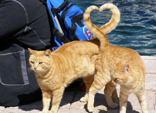 XX-Perfectly-Timed-Cat-Photos__605