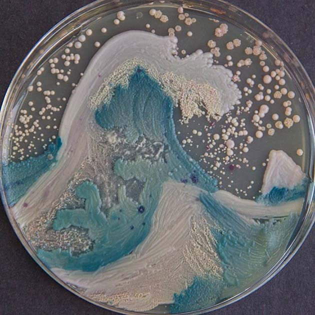 microbe-art-petri-dish-agar-contest-van-gogh-starry-night-american-society-microbiologists-42