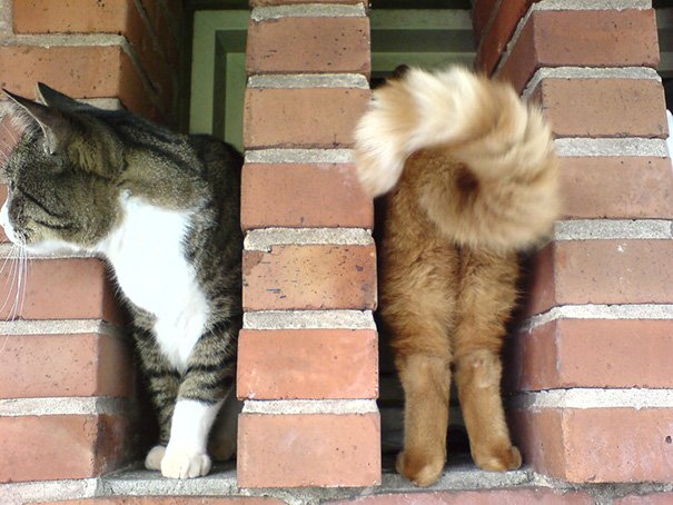 funny-perfectly-timed-cat-photo-52__605