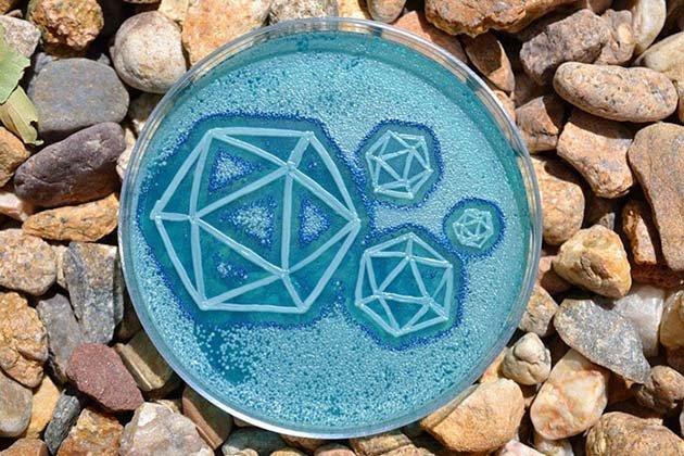 microbe-art-petri-dish-agar-contest-van-gogh-starry-night-american-society-microbiologists-45