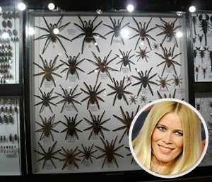 Claudia-Schiffer-Bug-Collection-300x257
