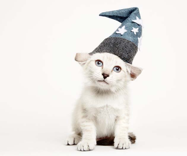 we-created-hats-for-shelter-cats-to-help-them-get-adopted-3__880