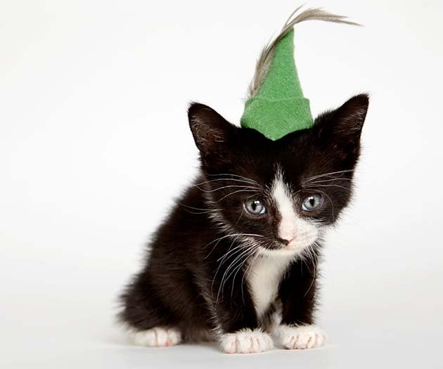 we-created-hats-for-shelter-cats-to-help-them-get-adopted-5__880