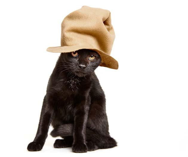 we-created-hats-for-shelter-cats-to-help-them-get-adopted-6__880