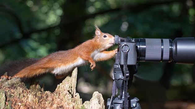 comedy-wildlife-201505